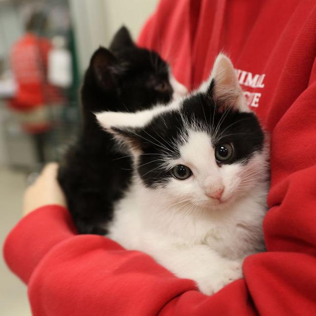 Mỗi chú mèo lại có tính cách khác nhau, thế nên làm tại trạm thú y Just Cats chẳng khác gì làm việc ở một bệnh viện dành cho người. Phức tạp hơn là mèo không biết nói nên bạn phải học cách thích nghi với chúng.