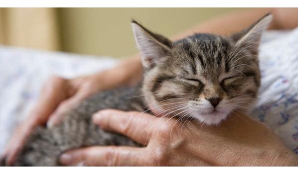 Việc nhẹ lương cao: Vuốt mèo kiếm tiền