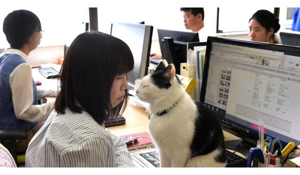 """Để giảm áp lực làm việc, nhiều công ty Nhật Bản đã tìm tới những """"người bạn 4 chân"""" như chó, mèo, dê…"""