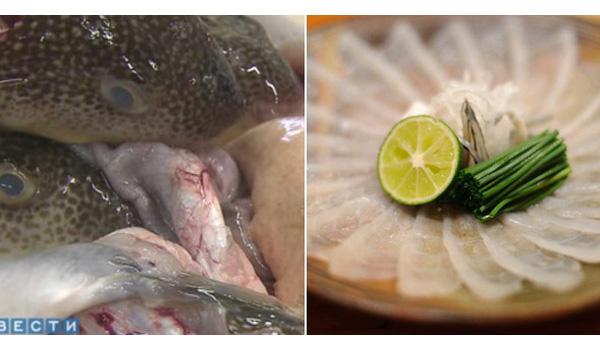 Hành trình gian nan để các bếp trưởng Nhật Bản được phép chế biến cá nóc